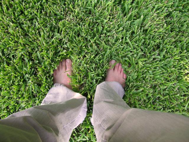 Lawn 1540788 640×480